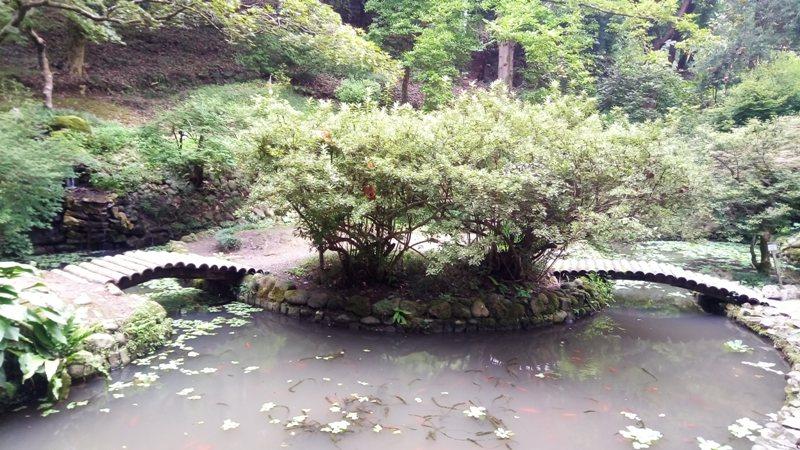 Японский сад.jpg