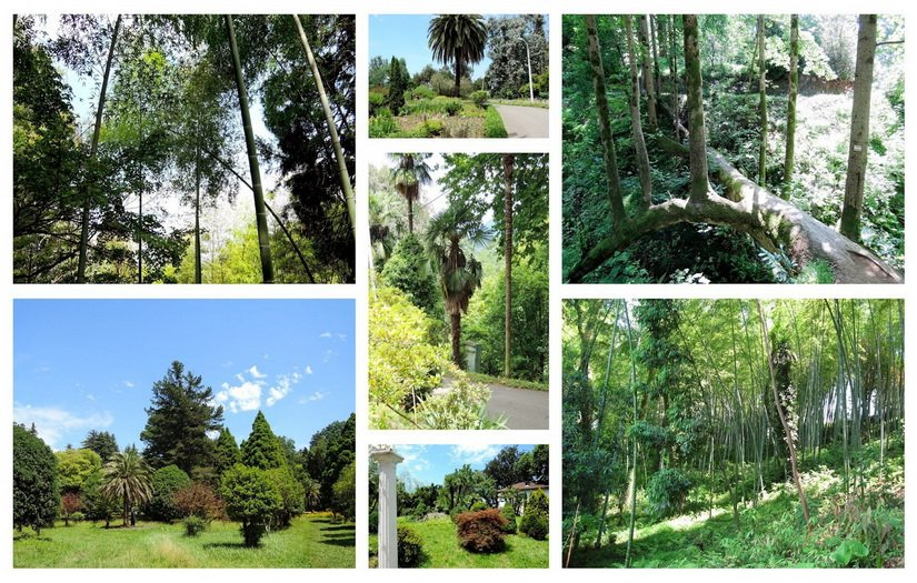 Фото батумского ботанического сада