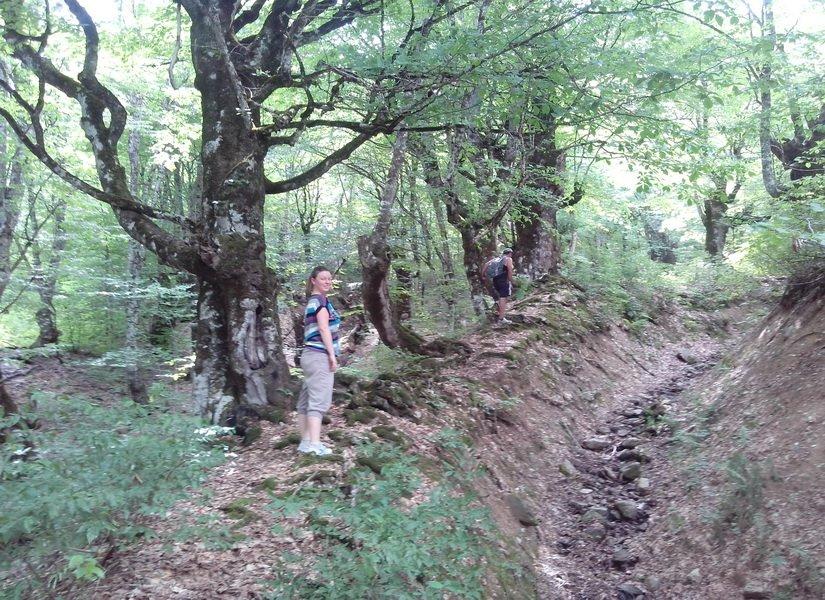 Треккинг в гору через лес